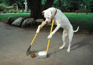 #impuesto sobre mascotas
