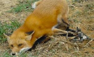 #nueva ley de caza