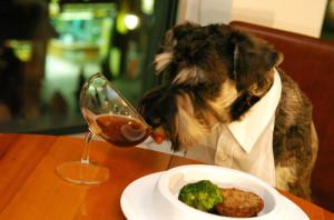 #Mascotas en restaurantes