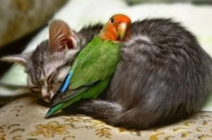 #Videos de maltrato animal